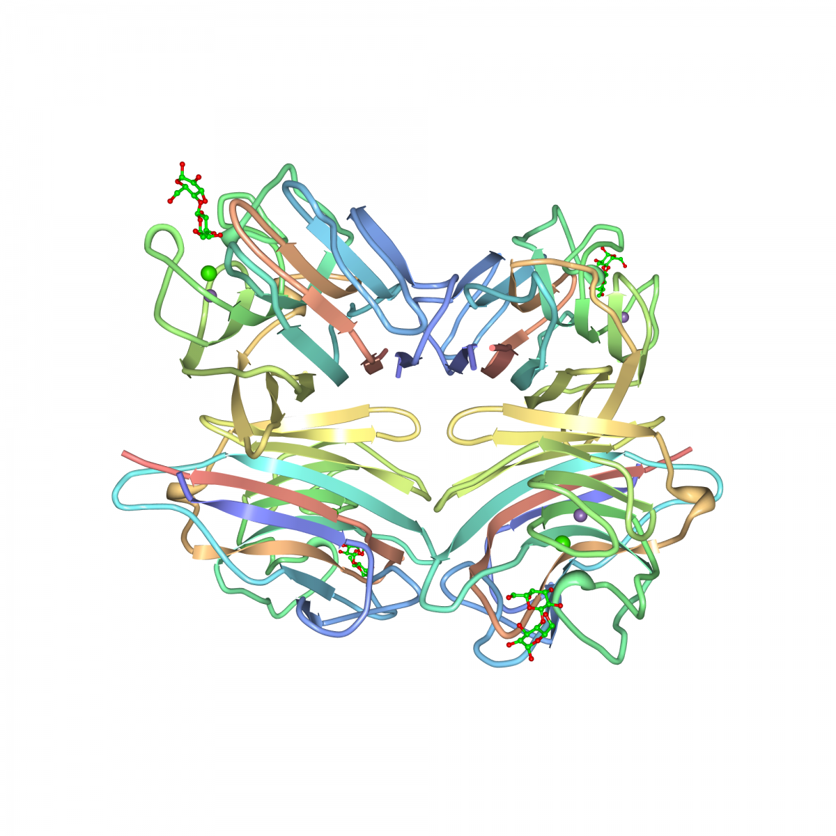 Crystal structure of peanut lectin